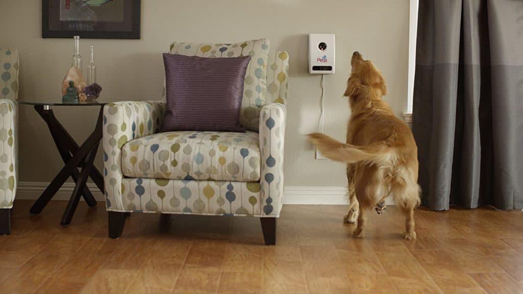 los mejores comederos inteligentes para perros